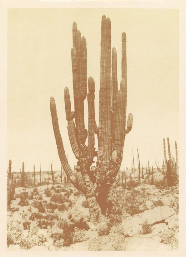 southwest cactus print