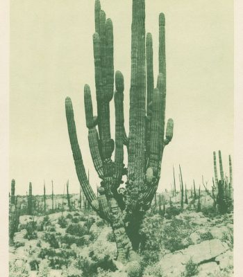 antique cactus art