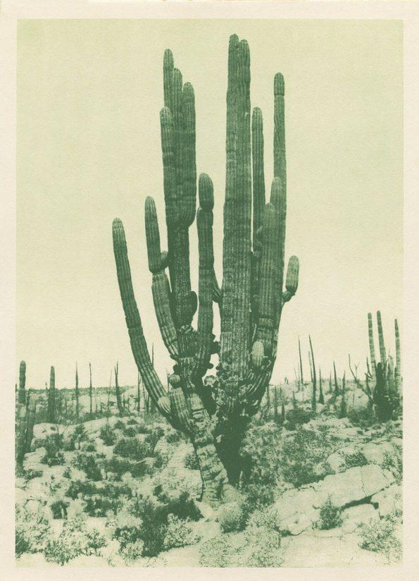 antique cactus art