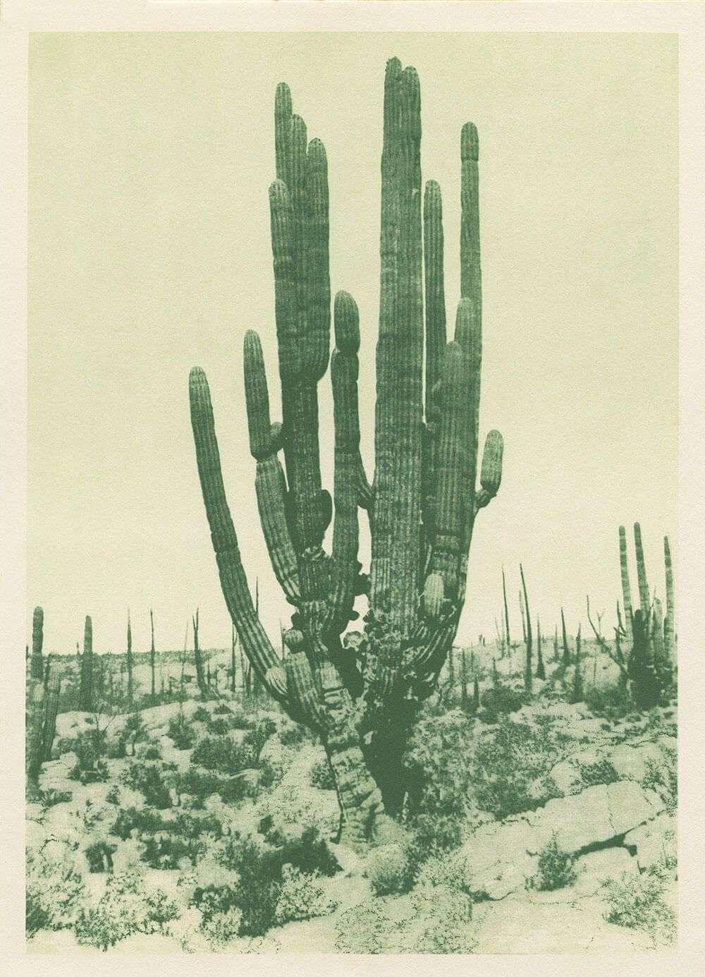 Antique Cactus Print 3 Colors Capricorn Press