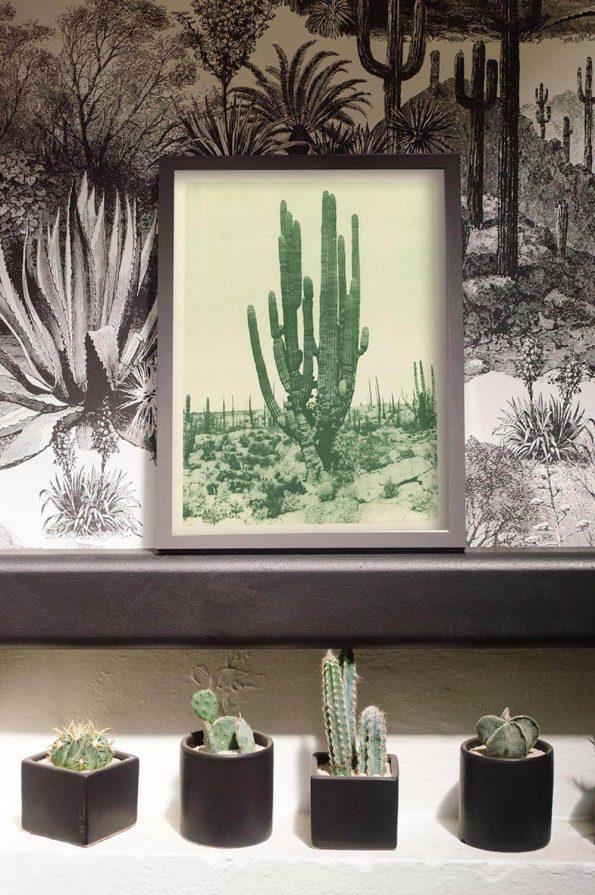 antique cactus print
