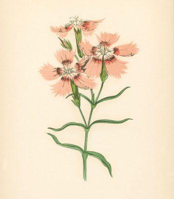 pink flower art print