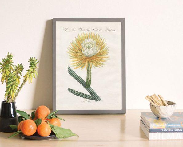 desert succulent print