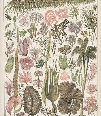 victorian seaweed print with pink and green