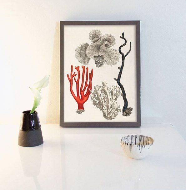 coral seaweed print