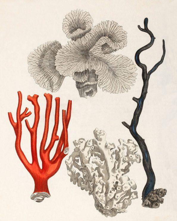 Antique Coral Group