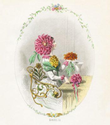 grandville Dahlia print