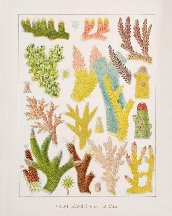 brightly colored coral print