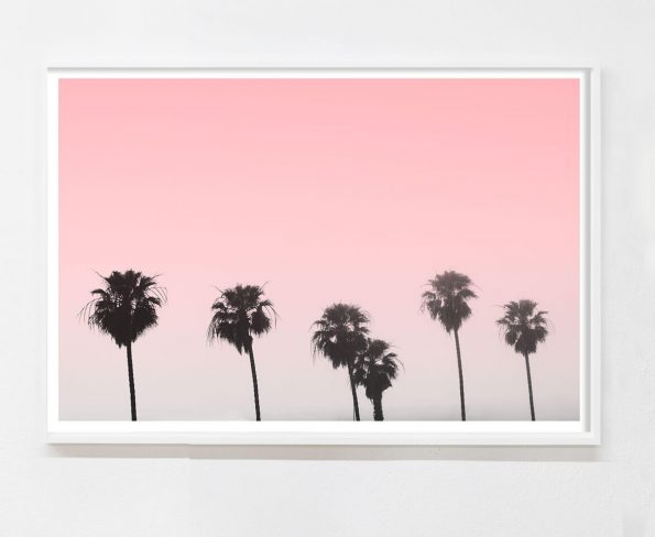 minimalist palm tree photo