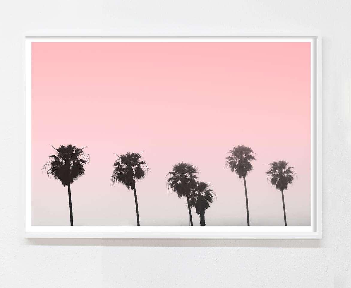 minimalist palm tree photo