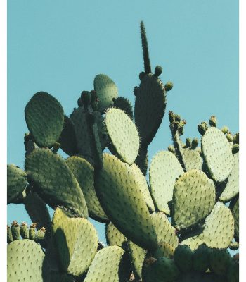 large cactus art in blue
