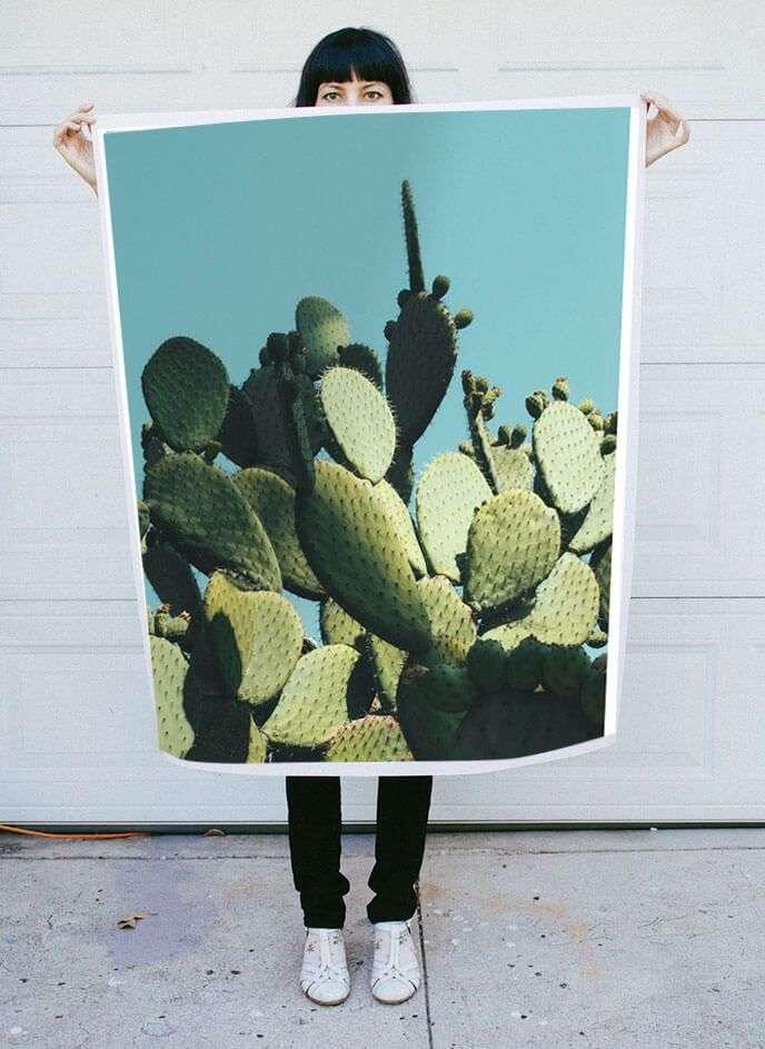 cactus photo with blue sky