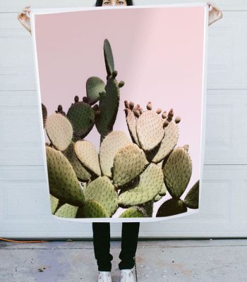 pink cactus photo