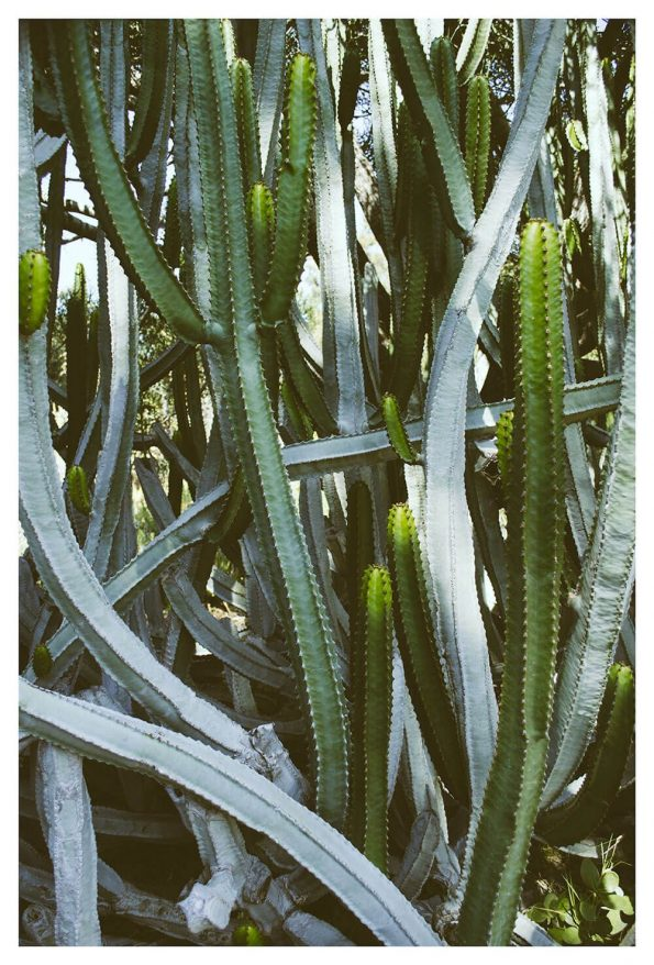 large succulent art