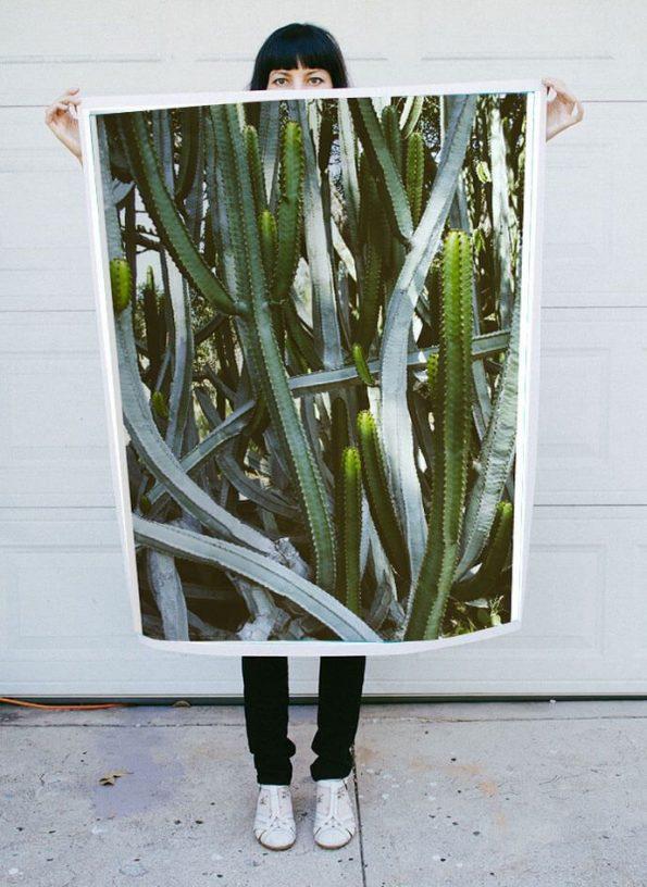 large cactus photo