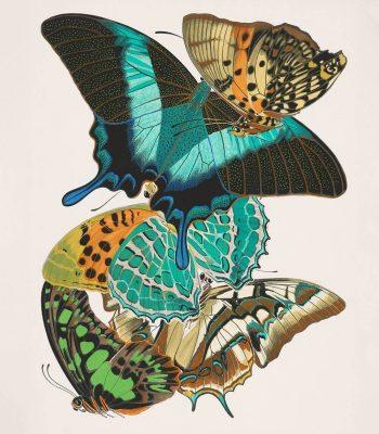 art deco butterfly print