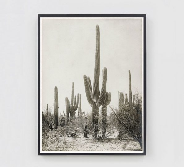 vintage cactus print sepia