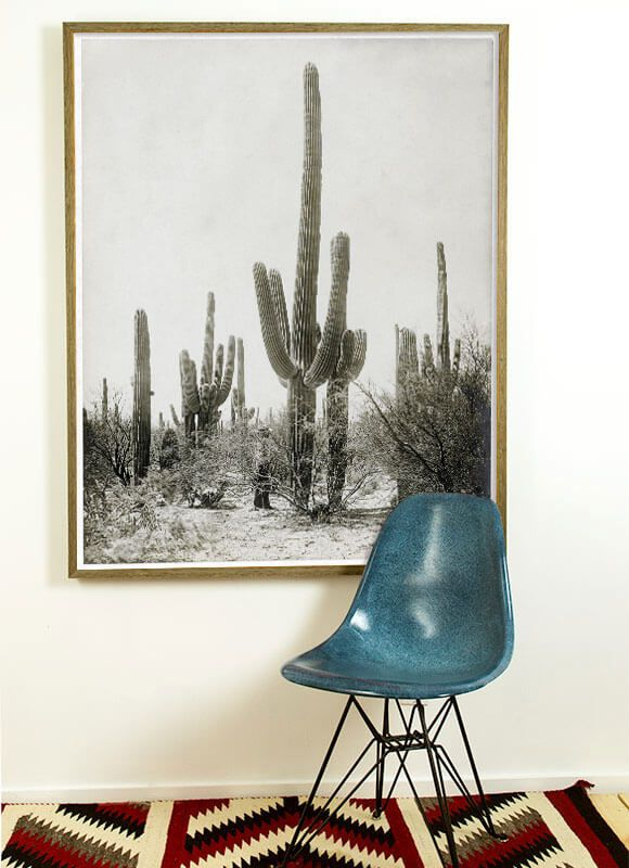 antique cactus photo