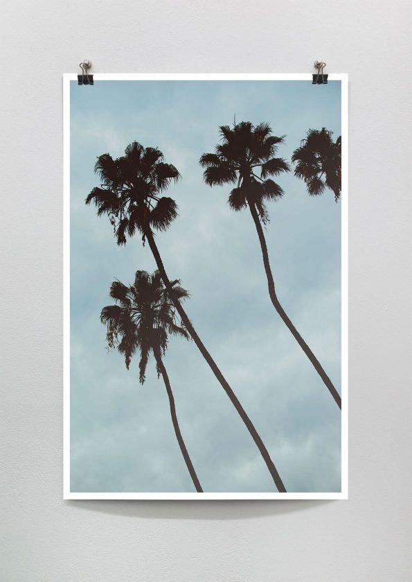 minimal palm tree photograph