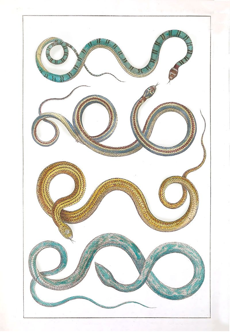 colored snakes print | Capricorn Press