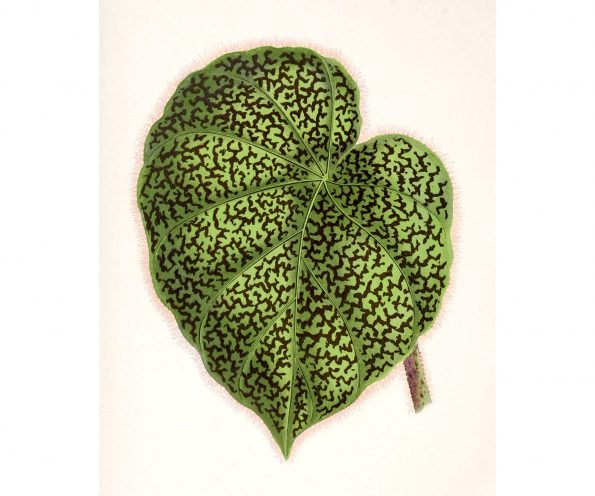 botanical leaf print