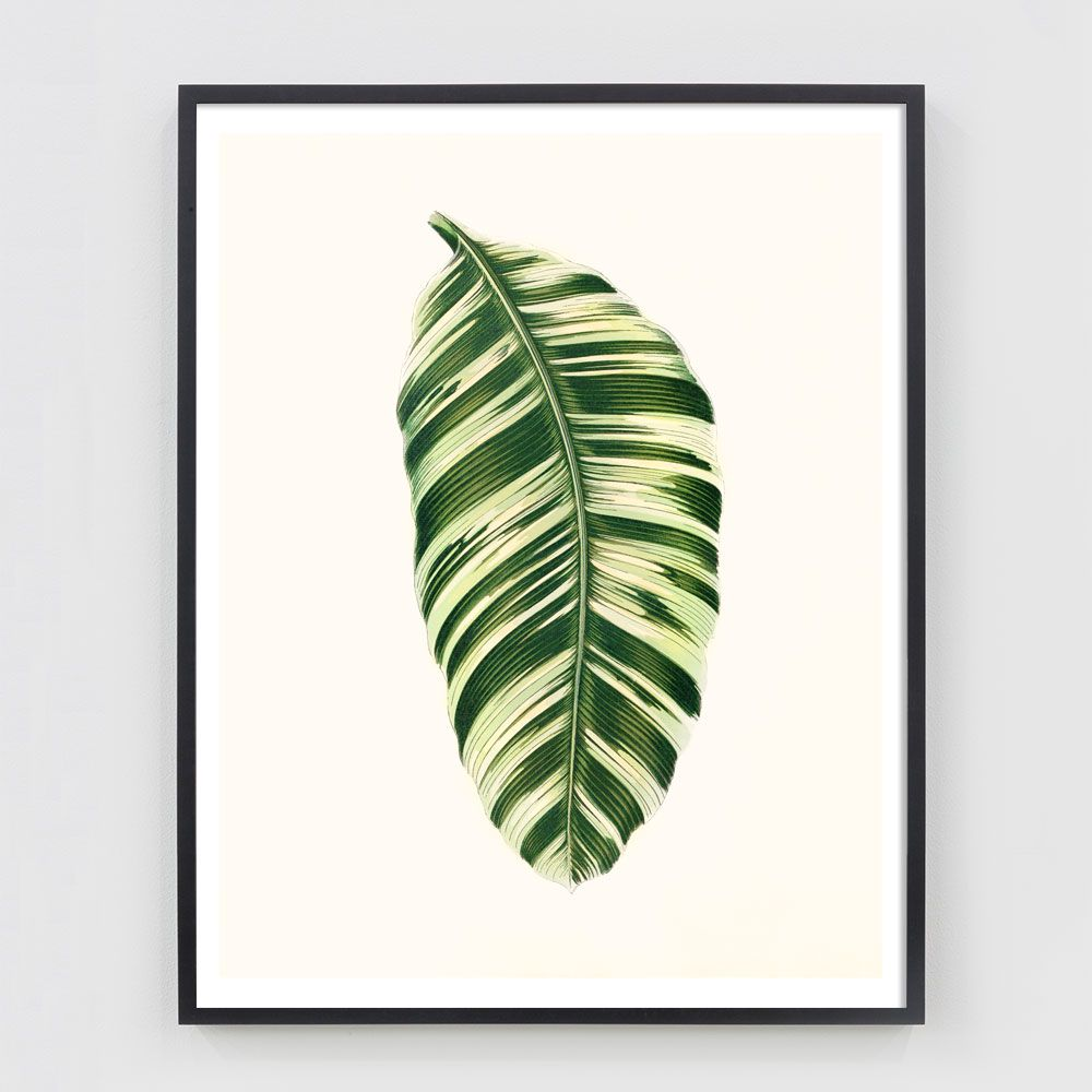 Antiquarian Leaf Botanical Print #15