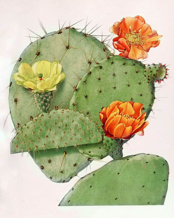 flowering cactus art
