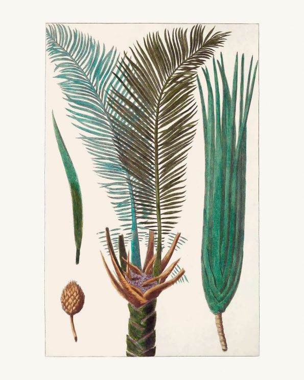 Southwestern colored palm tree