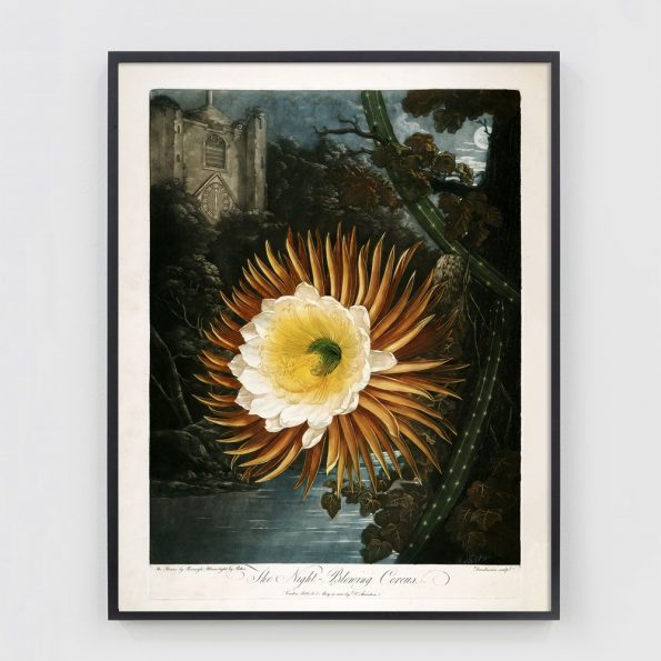 surrealist botanical print