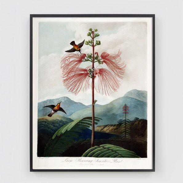 vintage hummingbird art print