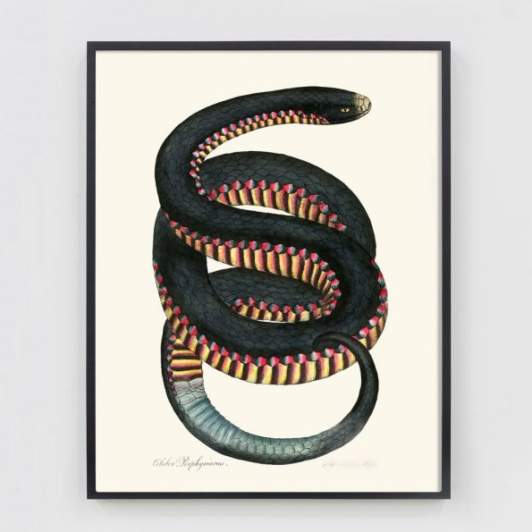 southwestern wall decor with snake