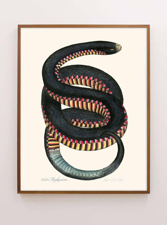 Rainbow colored snake print