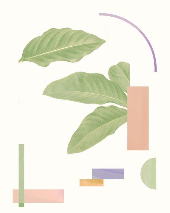 organic modern botanical print