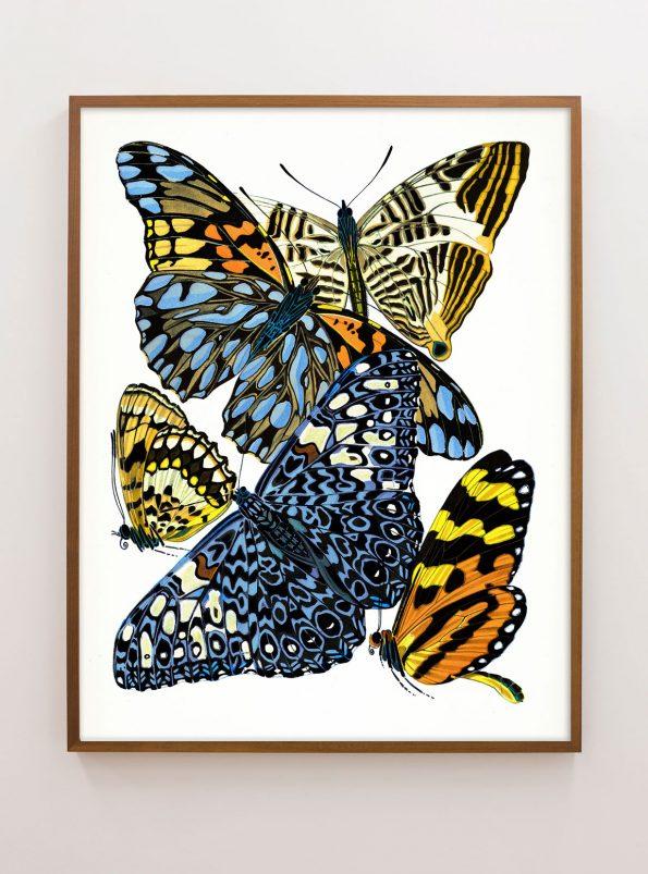 seguy butterfly
